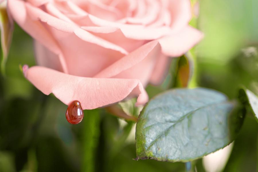 真爱如血 耳钉 玛瑙款-rose-01